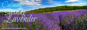 doTERRA Lavender essential oil is calming and soothing