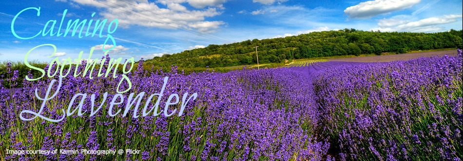 Lavender essential oil is calming and soothing