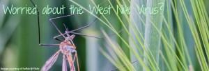 How to eliminate West Nile virus worries!