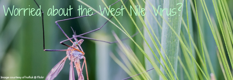 worried about the west nile virus? doTERRA has answers!